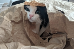 Of all her toys, packing paper is Athena's favorite.